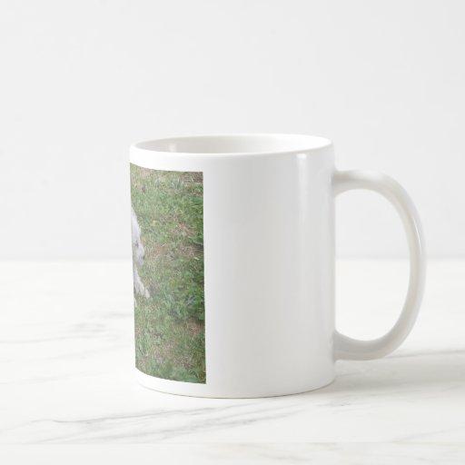 perrito del perro tazas de café