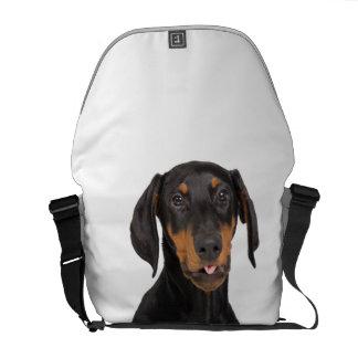 perrito del pinscher del doberman bolsas de mensajeria
