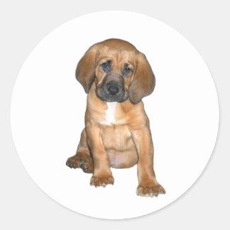 Perrito del sabueso (#1) etiqueta redonda