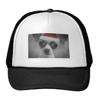 Perrito divertido de la chihuahua del navidad con  gorros bordados
