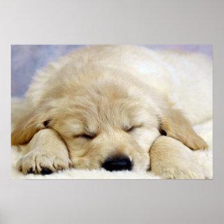 Perrito dormido póster
