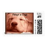 Perrito dulce - adopte un sello del perro