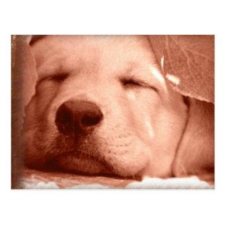 Perrito dulce - adopte una postal del perro