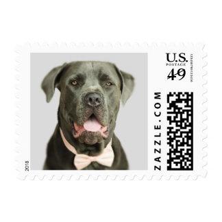 Perrito dulce en una pajarita timbre postal