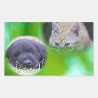 Perrito el dormir y pegatina de espionaje del gato