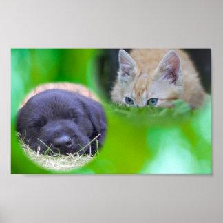 Perrito el dormir y poster de espionaje del gato