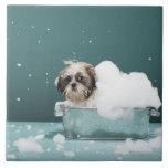 Perrito en baño de la espuma azulejo cuadrado grande