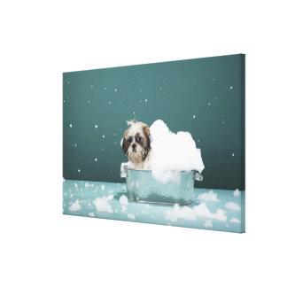 Perrito en baño de la espuma lienzo envuelto para galerias