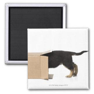 Perrito en caja de cartón imán cuadrado