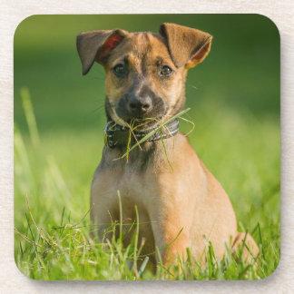 Perrito en la hierba posavaso