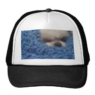 Perrito en manta gorra