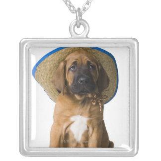 perrito en un gorra de vaquero collar plateado