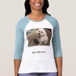 Perrito en una camiseta agradable