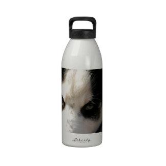 Perrito espigado soñoliento del husky siberiano de botella de beber