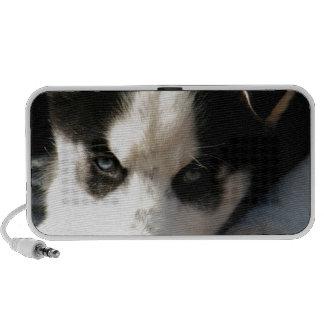 Perrito espigado soñoliento del husky siberiano de laptop altavoz