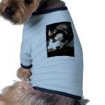 Perrito espigado soñoliento del husky siberiano de ropa de perro