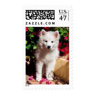 Perrito esquimal americano que se sienta en las sellos postales