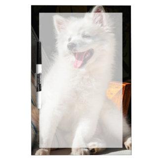 Perrito esquimal americano que se sienta en una tableros blancos