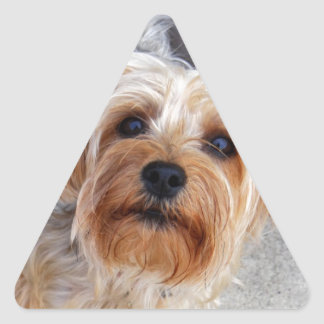 Perrito feliz de Yorkie Pegatina Triangular