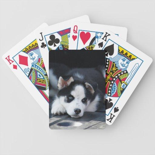 Perrito fornido espigado del perro de trineo del L Baraja