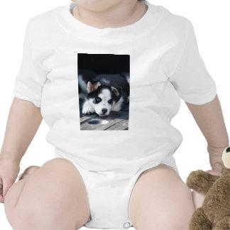 Perrito fornido espigado del perro de trineo del L Traje De Bebé