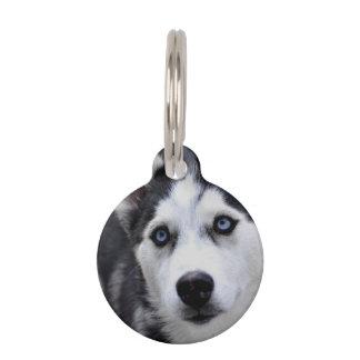 Perrito fornido identificador para mascotas
