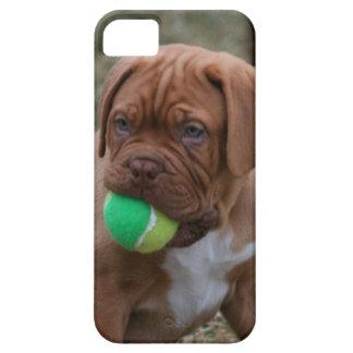 Perrito francés del mastín iPhone 5 protectores