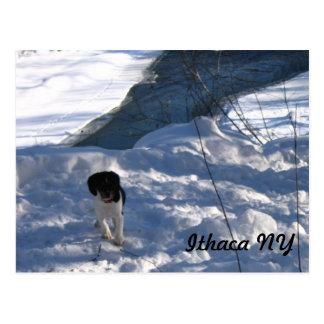 Perrito frío tarjetas postales