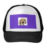 perrito gorras