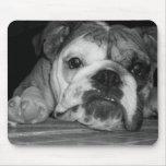 Perrito inglés blanco y negro del dogo tapete de ratones