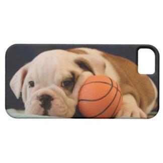 Perrito inglés del baloncesto del dogo funda para iPhone 5 barely there