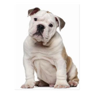 Perrito inglés del dogo (2 meses) tarjeta postal