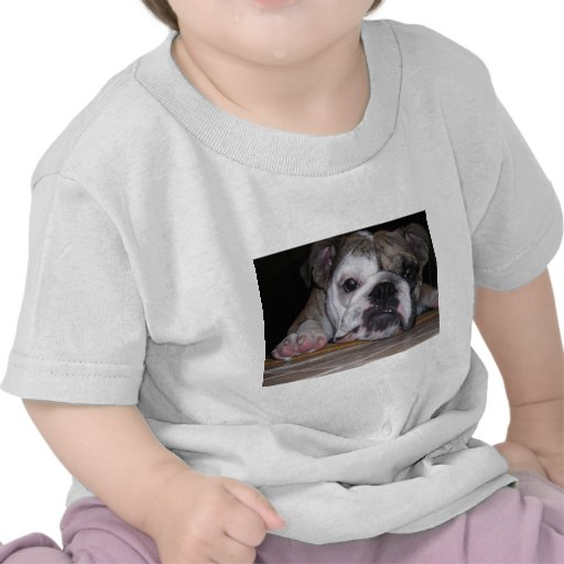 Perrito inglés del dogo camisetas