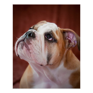 Perrito inglés del dogo impresiones
