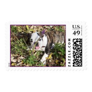Perrito inglés del dogo sello