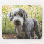 Perrito inglés del perro pastor en bosque alfombrillas de raton