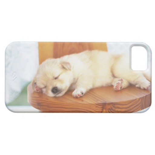 Perrito iPhone 5 Carcasa