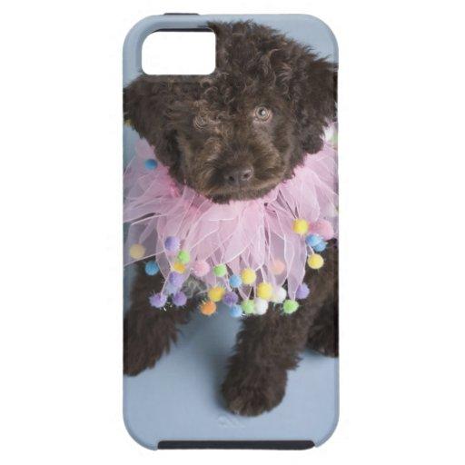 Perrito italiano del perro de agua (Lagotto) iPhone 5 Carcasa