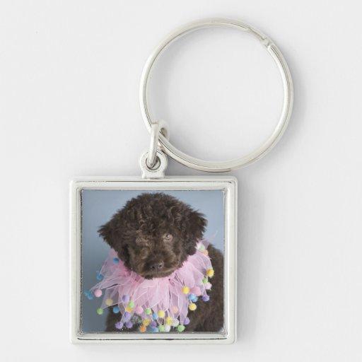 Perrito italiano del perro de agua (Lagotto) Llavero Cuadrado Plateado