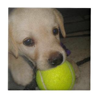 Perrito lindo con la bola azulejo cuadrado pequeño