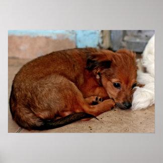 Perrito lindo de Brown con los ojos tristes que mi Impresiones