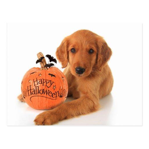 Perrito lindo de Halloween con una calabaza Postal