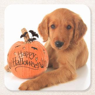 Perrito lindo de Halloween con una calabaza