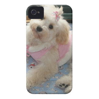Perrito lindo de Havanese iPhone 4 Case-Mate Cobertura