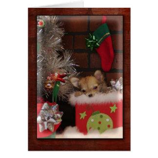 Perrito lindo de la chihuahua del navidad en caja felicitación
