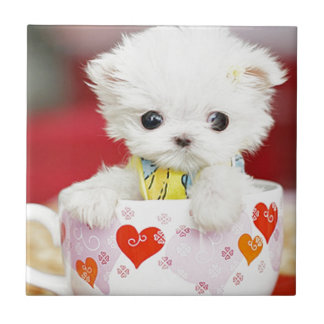 perrito lindo de la taza de té teja