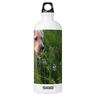 Perrito lindo de Labrador en hierba