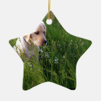Perrito lindo de Labrador en hierba Adorno Navideño De Cerámica En Forma De Estrella