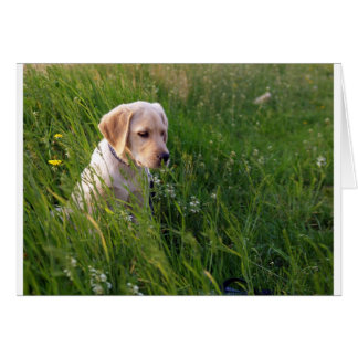 Perrito lindo de Labrador en hierba Tarjeta De Felicitación