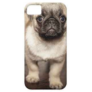 Perrito lindo del barro amasado iPhone 5 carcasas
